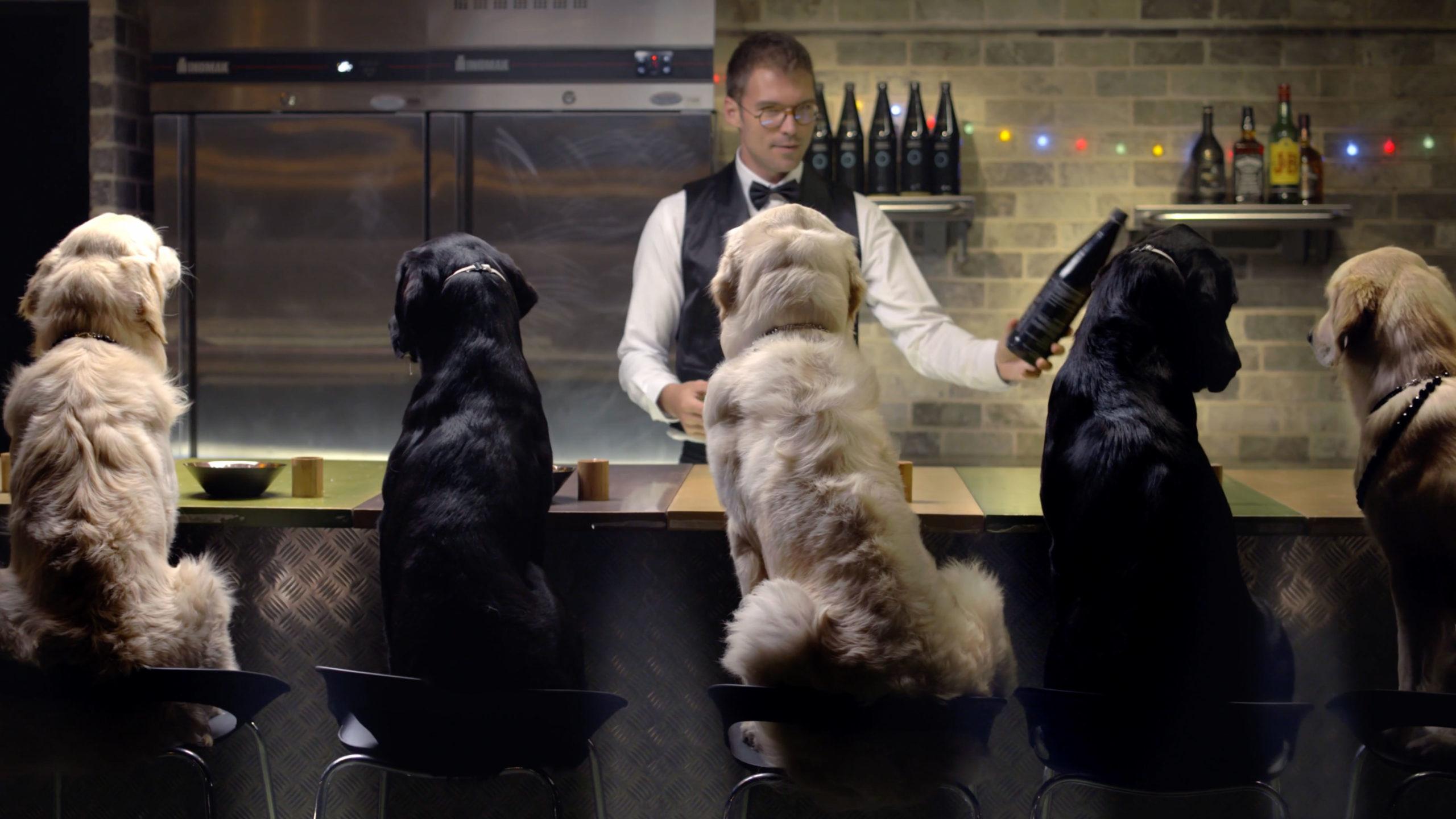 קמפיין פרסומות חדש למותג האוכל לכלבים שהולך לשנות את פני השוק